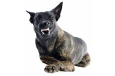 Dog Bites & Attacks